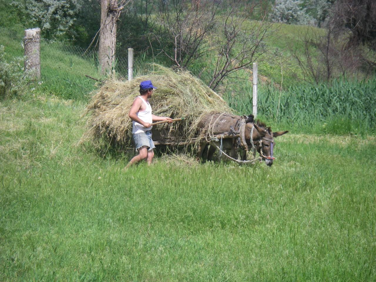 Moldawien-Reise 2014: Heuernte