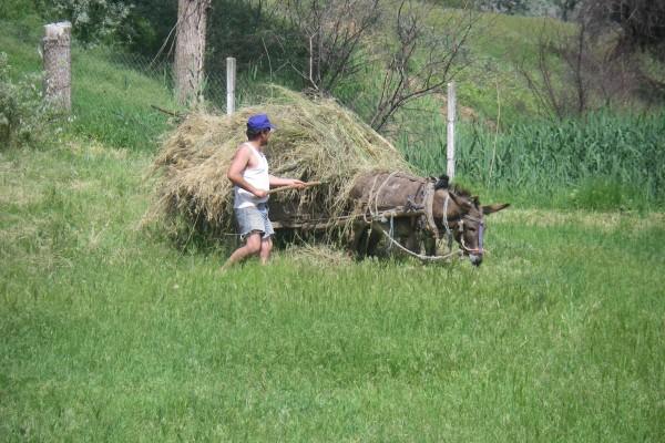 Heuernte in Moldawien